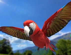 3D asset Scarlet Macaw - Animated
