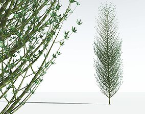 EVERYPlant Twisted Horsetail Tree 07 --12 Models-- 3D