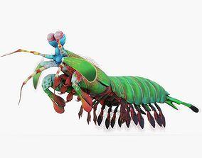 3D model Mantis Shrimp Rigged