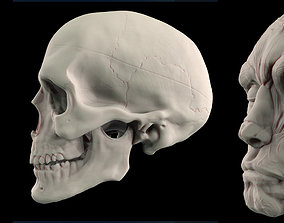 Human Skull 3D print model skull