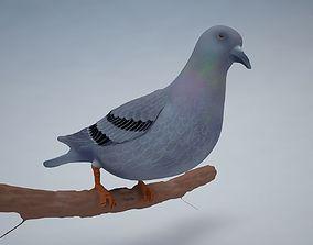 Pigeon Bird 3D model