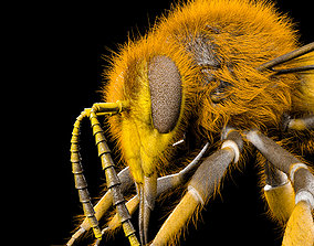 Bee Rigged Hairs 3D asset