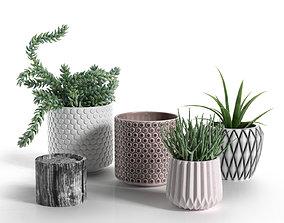 Pots with Donkey s Tail and Aloe Vera 3D