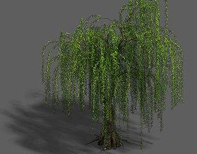 Plant - Willow 13 3D model