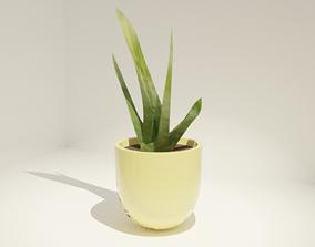3D model Cactus pot Plant pot inside or exterior plant
