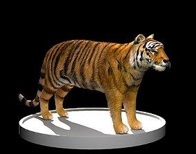 Tiger 3D Model realtime