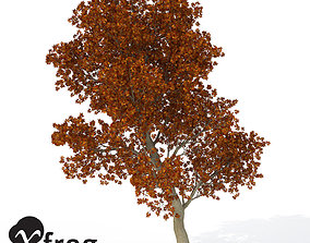 XfrogPlants Red Oak 3D model