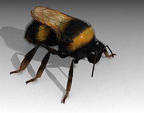 3D asset animated Bumblebee