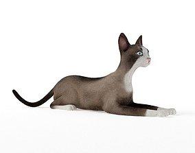 3D model Brown White Cat
