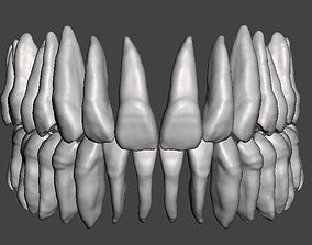 Real human teeth anatomy maxillary and 3D print model 1