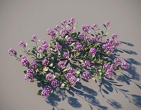 XfrogPlants Desert Sand Verbena - Abronia 3D model