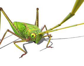 3D model game-ready Grasshopper Animals