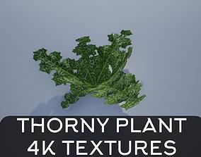 4K Thorny Cactus like Plant Lopwoly 3D model