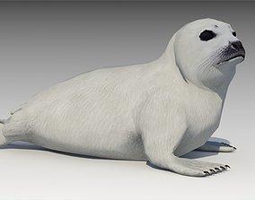 3D model animated Seal cub