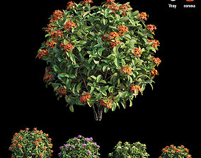 Ixora plant set 15 tree 3D