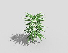 3D model low poly pot plant 1