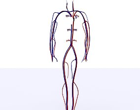 3D model Circulatory System Basic