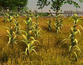 Corn Plant Game Ready 3D asset