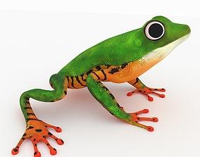 3D Frog 6