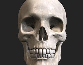 3D Skull PBR