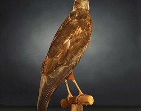 Bird Photorealistic Posed 3D asset