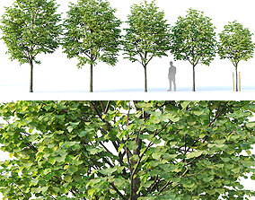 3D model Tilia europaea Nr 1 H4-7m Five tree set