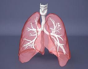 Human Lung with Bronchia - Anatomy Respiratory 3D model