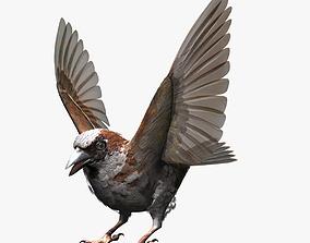 sparow 3D House Sparrow - rigged - animated