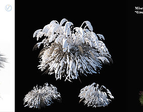 3D model Miscanthus sinensis large pack