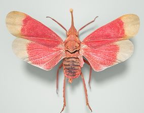 3D model realtime Cicada Pyrops Hamdjahi Peleng Insect