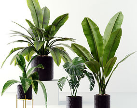 Collection plants 3D model VR / AR ready