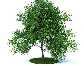 Small Tree With Hanging Greenery 3D model