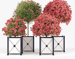 Seminole Pink Hibiscus 3D model