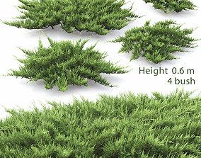 Juniperus Sabina 01 3D model