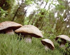 Mushrooms in Forrest 3D asset