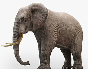 3D Rigged Elephant model rigged
