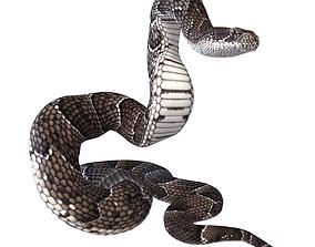 3D model Animated Puff Adder Snake