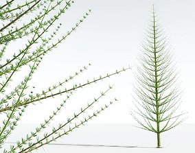 3D EVERYPlant Spiral Horsetail Tree 06 --12 Models--
