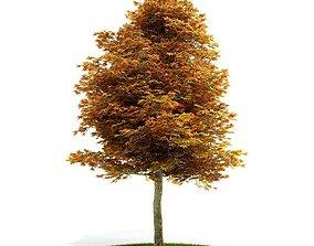 Deciduous Tree Turning Orange 3D model