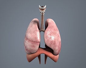 respiratory system 3D model VR / AR ready