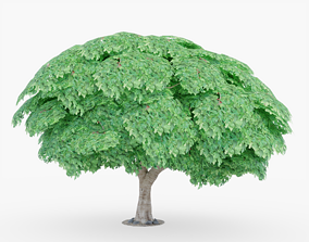 3D asset Fig Tree