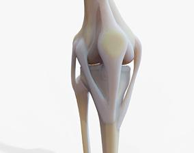 Knee joint 3D asset