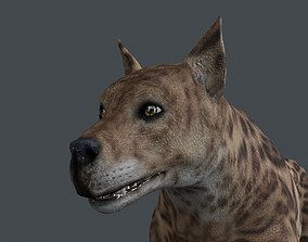 3D UVWD-017 Dog textures only
