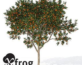 3D model XfrogPlants Sweet Orange