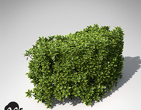 3D model XfrogPlants Golden Privet