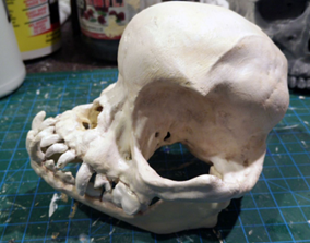 Pug skull 3D print model