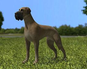 Great Dane 3D