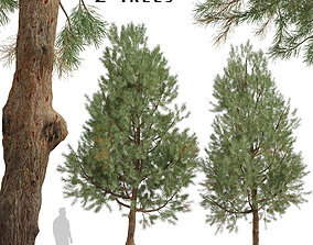 Set of Pinus Sylvestris or European red pine 3D model 3