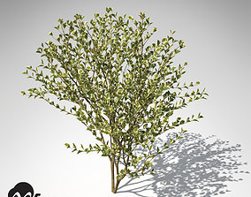 3D XfrogPlants Spindles