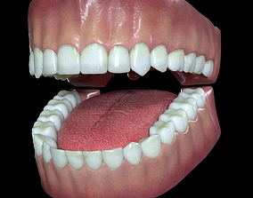 3D model anatomy Teeth and Gums